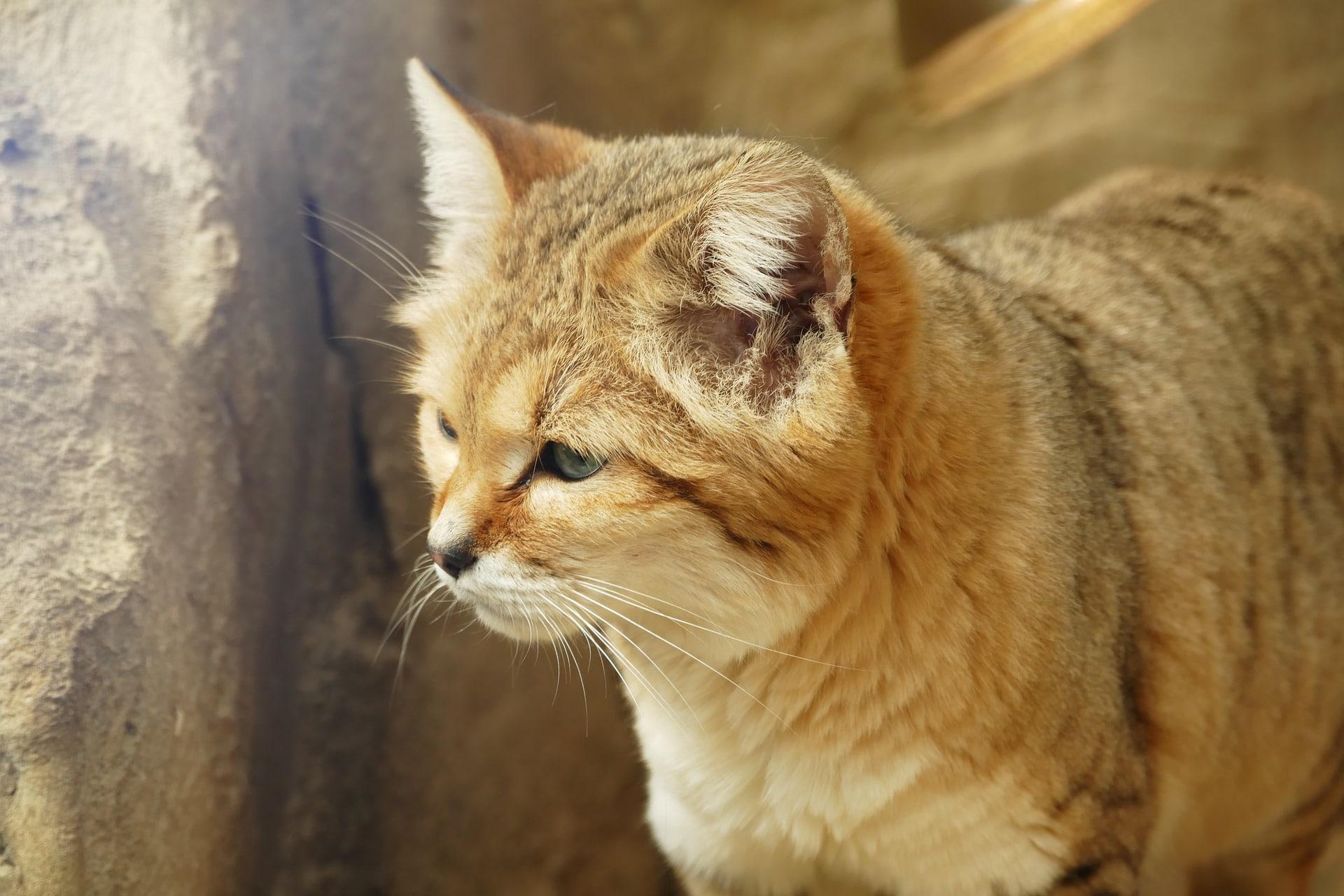 Katzensteckbrief