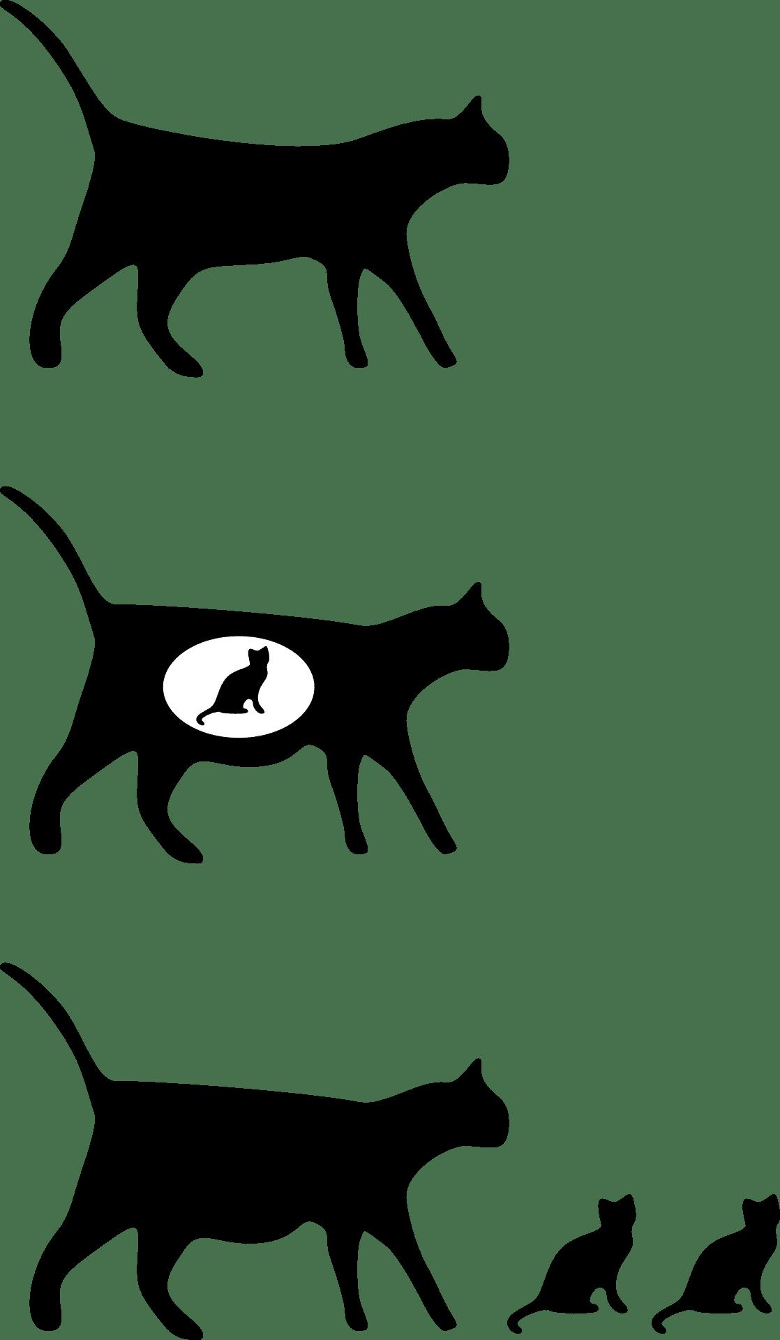 Katzen Schwangerschaft