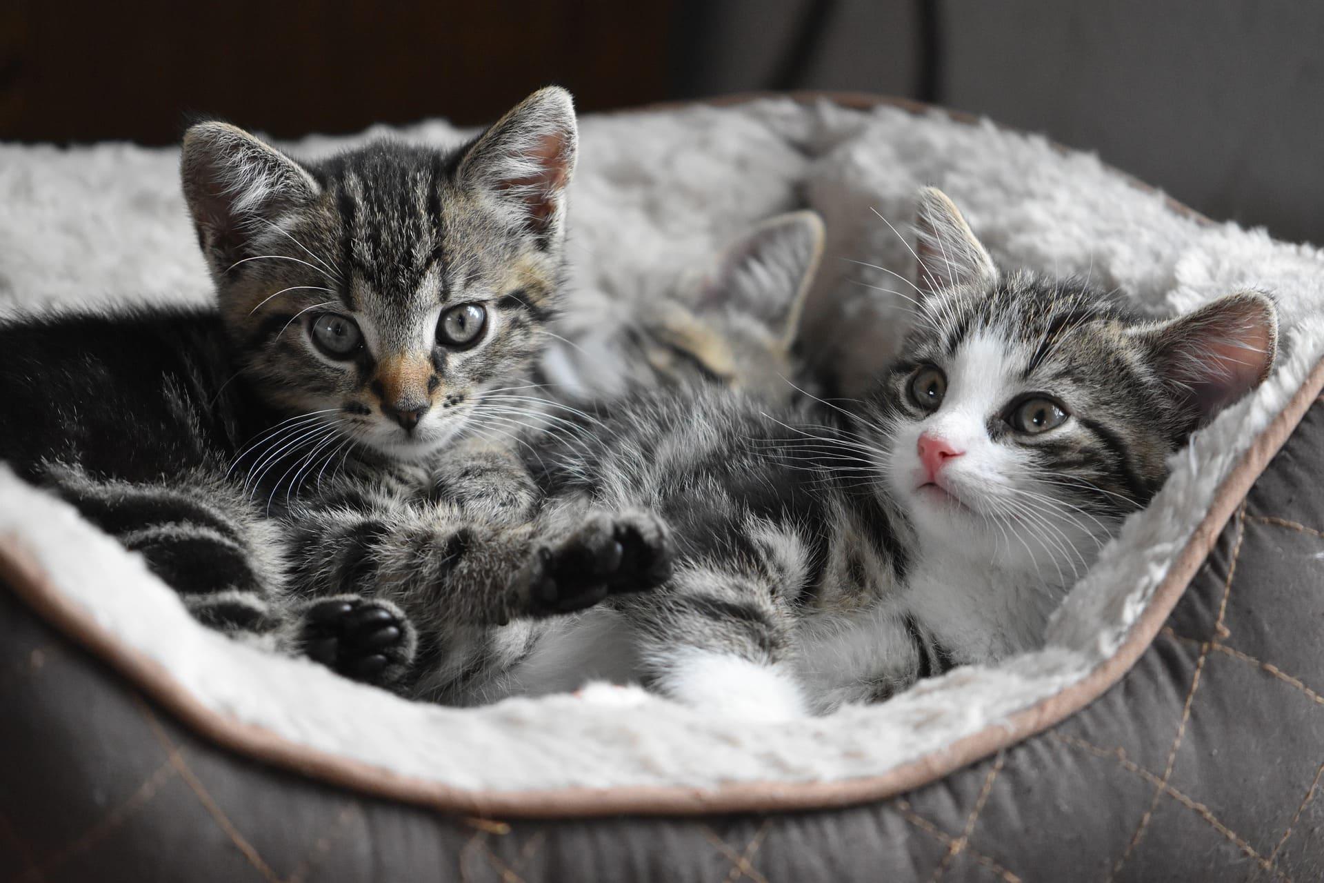 neues Kitten