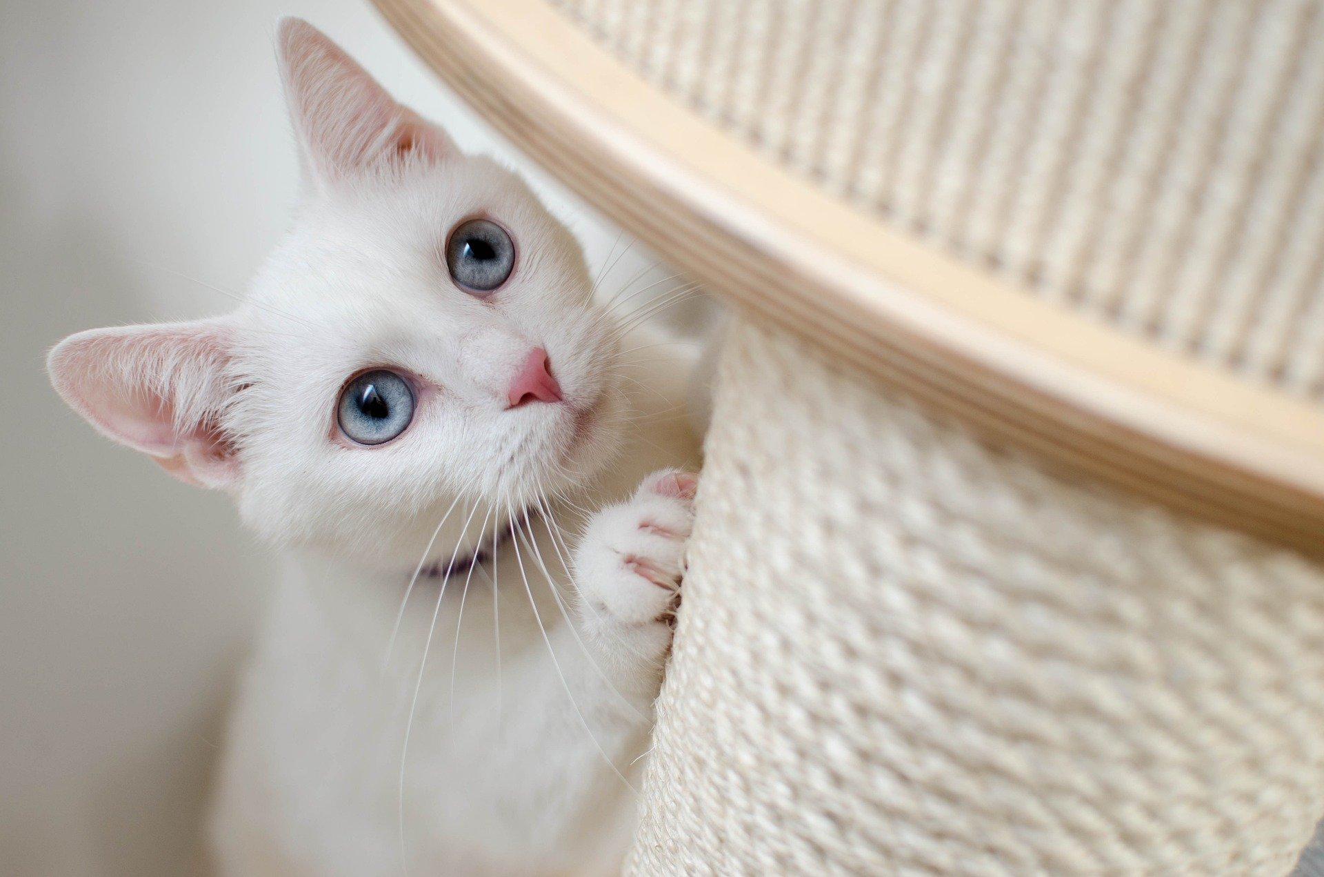 Katze kratzt an Möbeln abgewöhnen