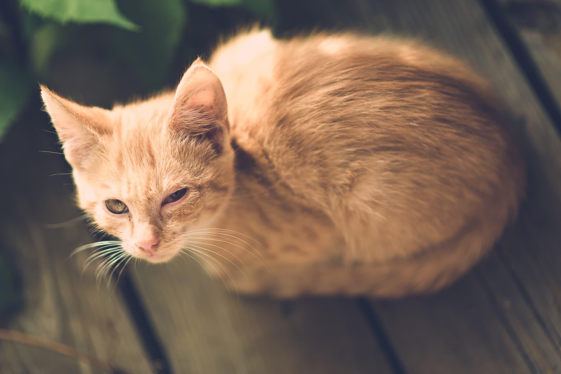 Katze kneift Auge zu