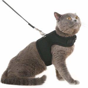 alternatives Katzengeschirr