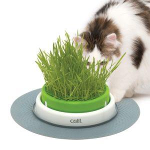 drittbestes Katzengras