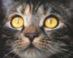 Katzenverhalten Katzenaugen
