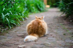Katzenverhalten Katzenschwanz
