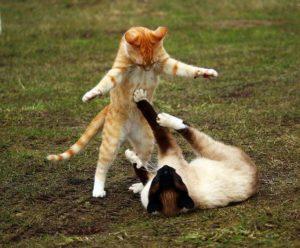 Katzen kämpfen, kratzen und beißen