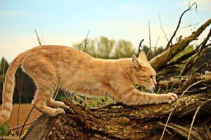 Katze kratzt an Baum