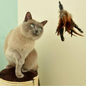 beste Amazon Katzenangel