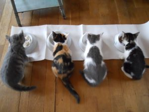 Katze frisst nicht Diagnose Bild