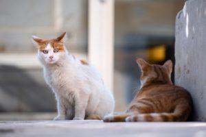 Katze entlaufen vermisst