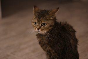 Eine gebadete nasse Katze