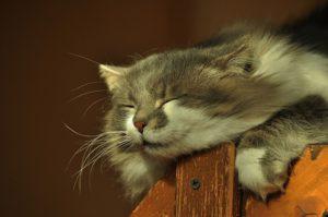Katze schnarcht