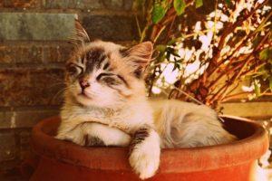 Katze schnarcht im Blumentopf