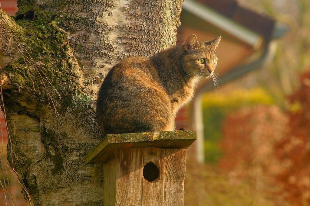 Katze hustet, weil sie sich wohlmöglich in der Natur etwas eingefangen haben.