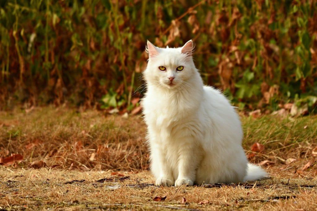 Ist der Katzenhusten diagnostiziert, sollte die kranke Katze erstmal die Natur meiden.
