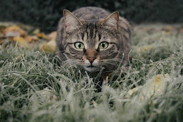 Was man über Katzen wissen sollte ist, dass sie eine beruhigende Aura versprühen
